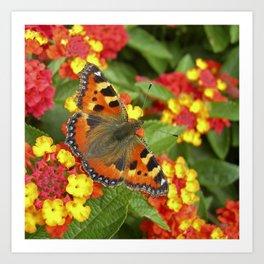 peacock butterfly XI Art Print
