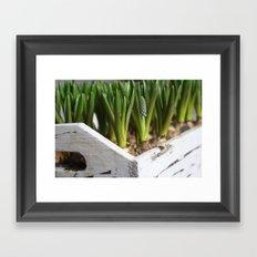 Box of Spring Framed Art Print