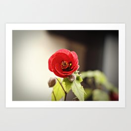 Little Red Flower Art Print