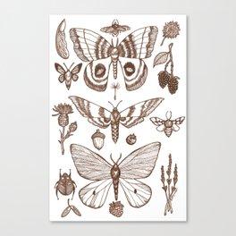 Natural History (Brown) Canvas Print
