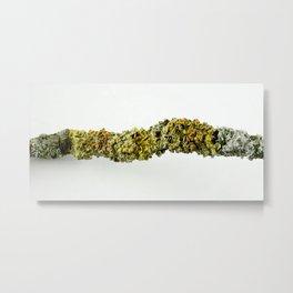 Lichen Texture Metal Print