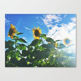 New Paltz Sunnies Canvas Print