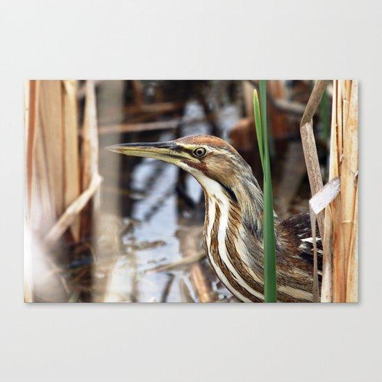 American Bittern - Take Two Canvas Print