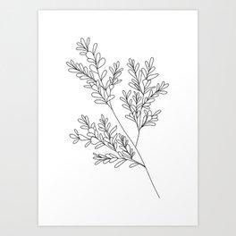 Boxwood Art Print