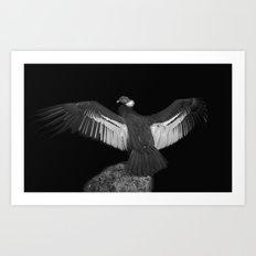 Adrean Condor Art Print