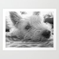 westie Art Prints featuring Westie puppy by  Alexia Miles photography