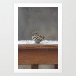 snowy bird Art Print