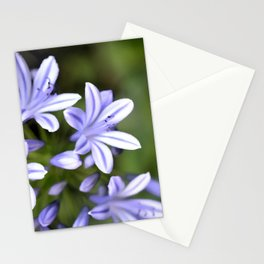 Lily of the Nile Stationery Cards