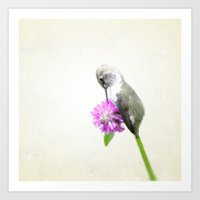 hummingbird Art Prints featuring Hummingbird  by Pure Nature Photos