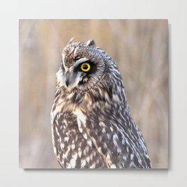 Portrait of a Short-Eared Owl Metal Print
