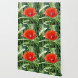 The Red Poppy in the Field Wallpaper