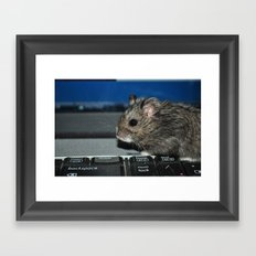 hamster on a keyboard Framed Art Print