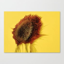 Centre Of Summer Canvas Print
