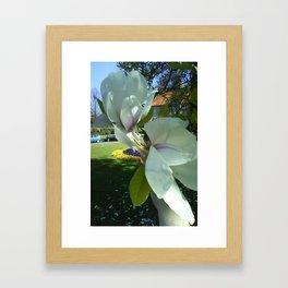 Magnolie Framed Art Print