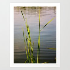 Evening Reeds Art Print
