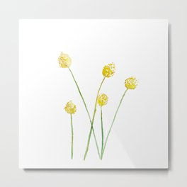 Yellow Billy Button Flowers Metal Print