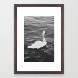 the swan. Framed Art Print