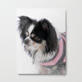 Lulu snow pup Metal Print