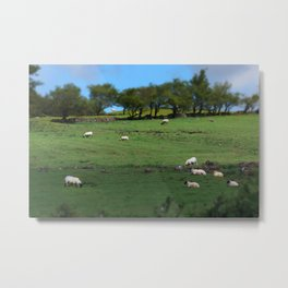 Field of Irish Sheep Metal Print