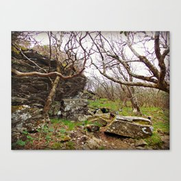 Room To Breathe Canvas Print