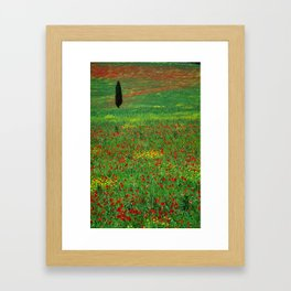 Tuscan landscape with poppies and cypress  Framed Art Print