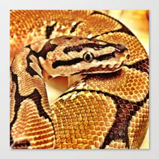 Python wearing Gold Canvas Print