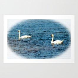 Two Mute Swans Art Print