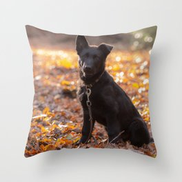 German shepherd, the black beauty Throw Pillow