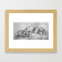 Golden Retriever young and old Framed Art Print