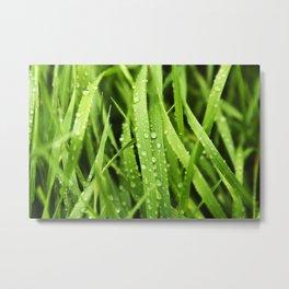 Rain drops, tall green grass, macro rain, plants, nature Metal Print