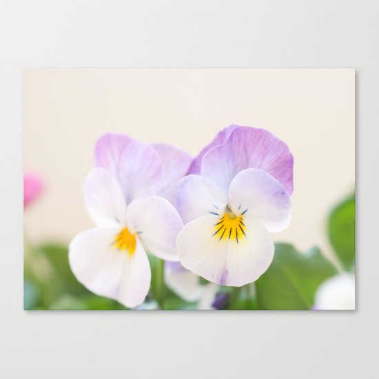 Spring Love #1 - Soft violet-white Pansies #decor #art #society6 Canvas Print