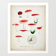 Red Fungi  Art Print