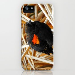Juvenile Male Redwing Blackbird iPhone Case