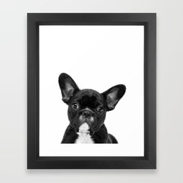 Black and White French Bulldog Framed Art Print