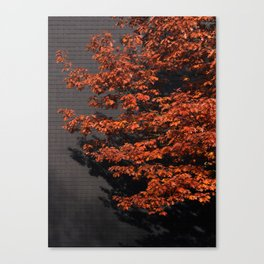Slate of Orange Canvas Print