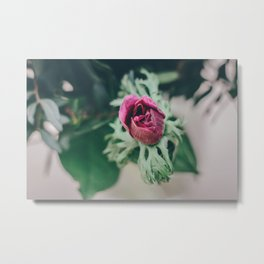 Flowermagic serie nr 3 Metal Print