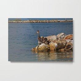 Clearwater Pelican Metal Print