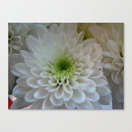 Macro Chrysanthemum Canvas Print