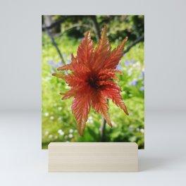 NEW SPRING LEAVES ON ACER TREE Mini Art Print