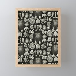 Ernst Haeckel - Thalamphora (Seashells) Framed Mini Art Print