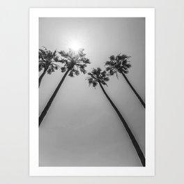 Palm Trees In The Sun Art Print