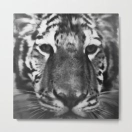 The Crying Eyes of a Tiger  Metal Print