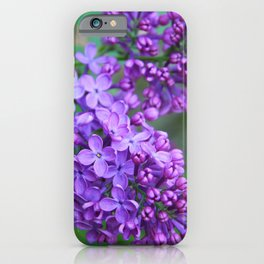 Lilacs Almost in Full Bloom iPhone Case
