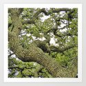 Live Oak of Coastal Texas by knutsonkreations