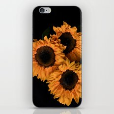 Sunflower Trio iPhone & iPod Skin