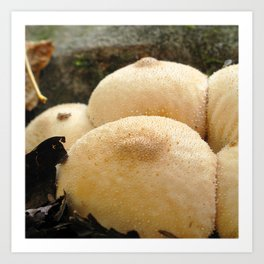 Watercolor Fungus, Gem-studded Puffball 01, Strickler Knob, Virginia, Double D! Art Print