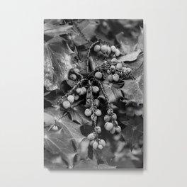 Framboise Metal Print