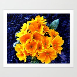 Flower at night Art Print