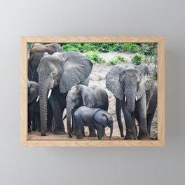 Group of Elephants Framed Mini Art Print