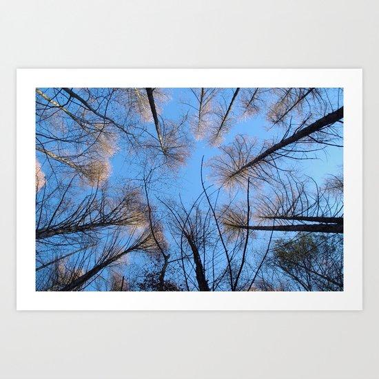 Glowing trees II Art Print